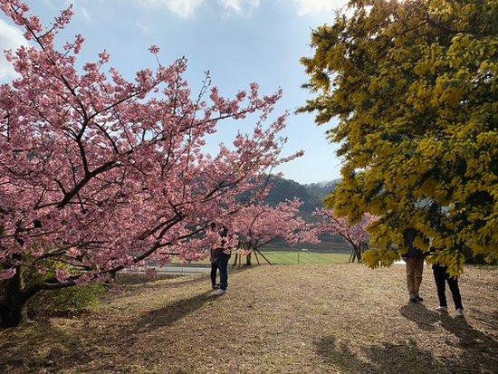 Zdjęcie Shodo-shima