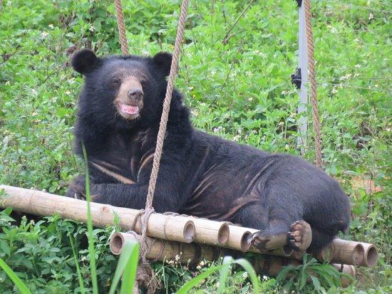 Cơ Sở Bảo Tồn Gấu Ninh Bình