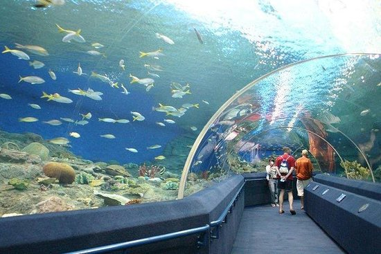 Underwater World på Pattaya Admission...