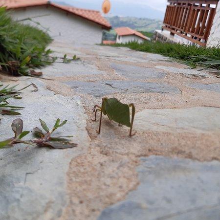 Департамент Уила, Колумбия: Tour donde la tranquilidad, el bienestar y la conexión con la naturaleza te dejarán renovado