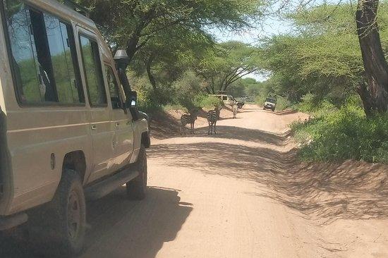 Chiko Safaris
