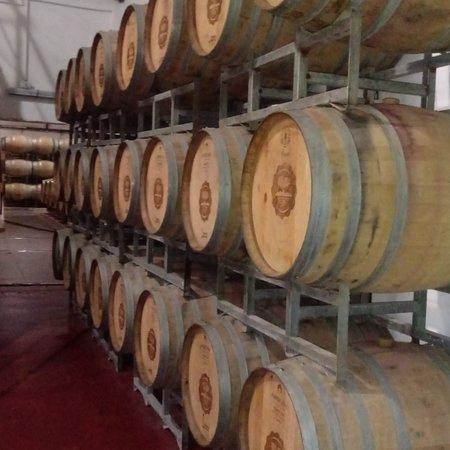 Visita a vinicola