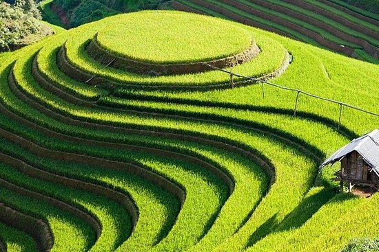 3-day Adventure to Mu Cang Chai Rice Fields