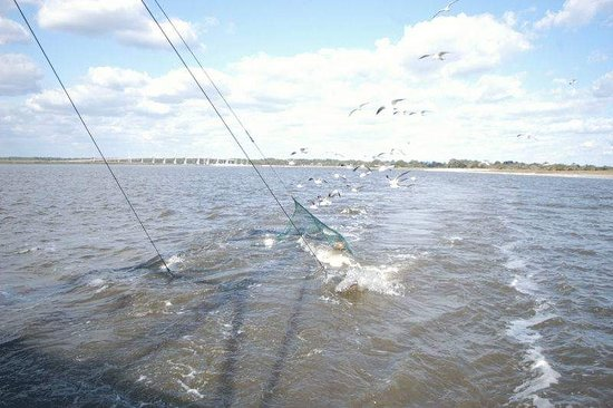 Golden Isles of Georgia, GA: Nets being retrieved for another trawl, the sea gulls know what is instore