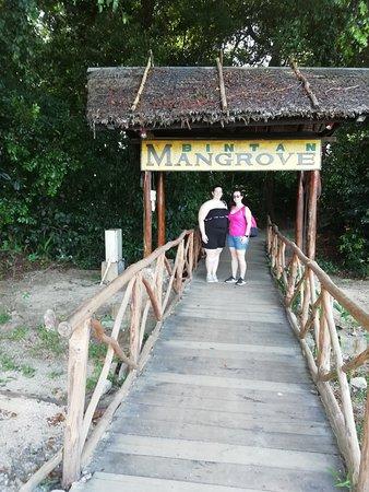 Bintan Transportation - Day Tours: Mangrove tour