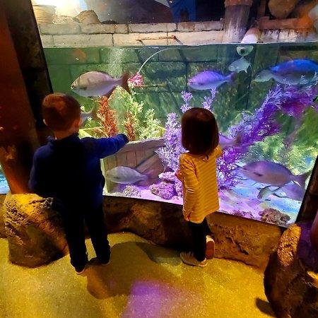 SEA LIFE Michigan Aquarium (Auburn Hills) - 2020 All You ...