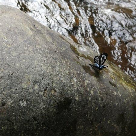 Pichinde, Колумбия: Pozo azul le llaman, agua fresca, limpia, fría y un pozo hondo donde puedes nadar en medio de la naturaleza y la tranquilidad. Es un lugar que permanece limpio y es visitado por caminantes de la ciudad de Cali y gente de la zona. Recomendado para pasar una tarde refrescante.