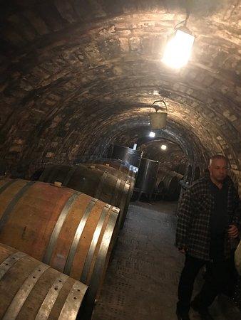 Nyúl, Magyarország: wijn kelder