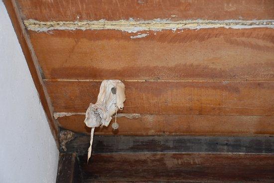 Surama Village, Гайяна: Ceiling of cell block bathroom