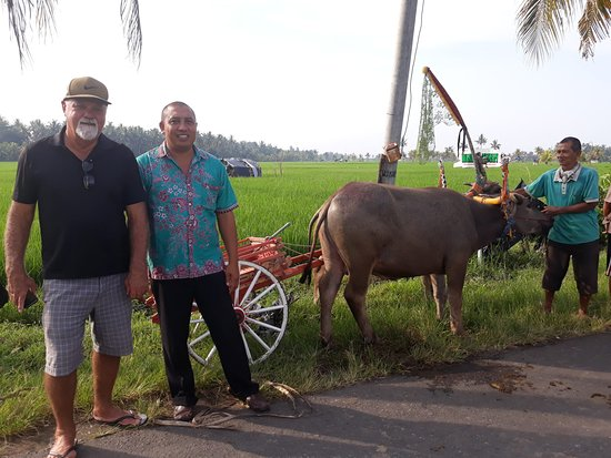 Pemuteran, Indonezja: Bull racing