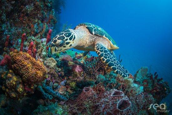 Saba Divers