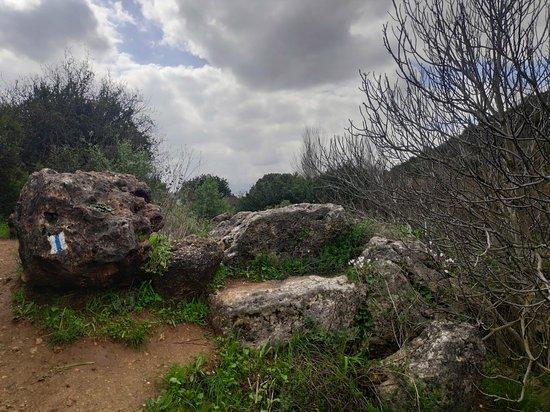Meron, Israel: ניל צלמון למרגלות השמורה