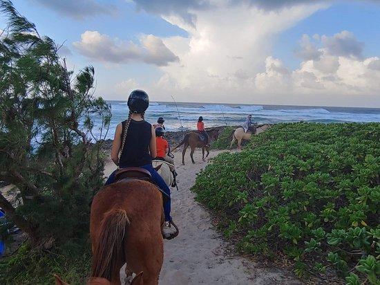 Turtle Bay Resort Horse Riding
