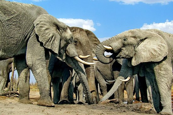 Victoria Falls & Chobe Safari...