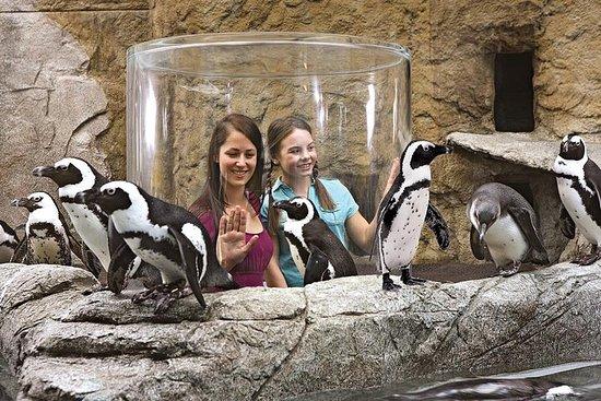 Aquarium de Ripley à Myrtle Beach