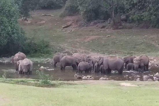 Elephant Land Jeep-Safari