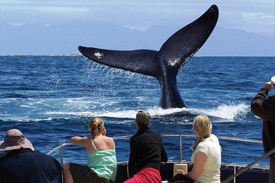 全天觀鯨之旅