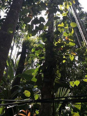 Tropical Spice Plantation (Ponda) - 2020 What to Know ...