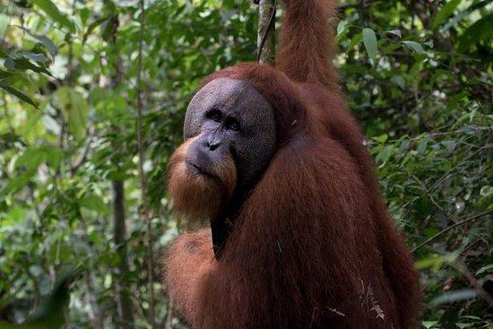 Hiking trek sumatra