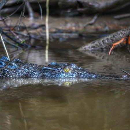 Solar Whisper Daintree River Wildlife Cruises: Watching the watchers