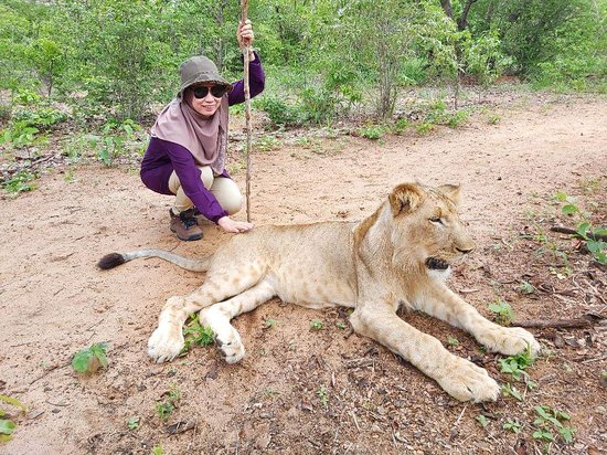 Walk with Lions - Zimbabwe لوحة