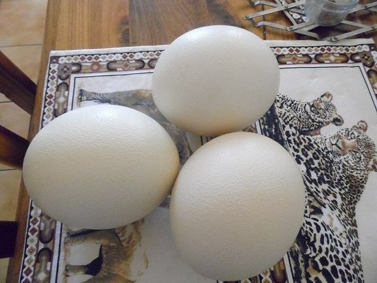 Территория столицы Австралии, Австралия: Ostrich Fertile Eggs for sale whatsapp +27631521991