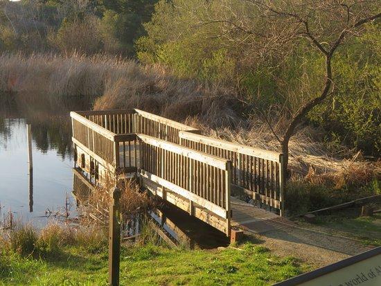 Pond, Skyline Ridge Open Space, La Honda, Ca