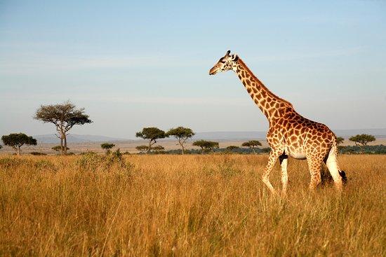 EUGEN TANZANIA SAFARIS - Picture of EUGEN TANZANIA SAFARIS, Arusha - Tripadvisor