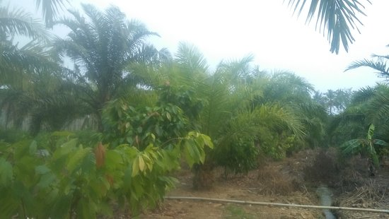 Meenangadi, India: Field