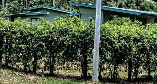 Brokopondo District, ซูรินาเม: Resort cottages.