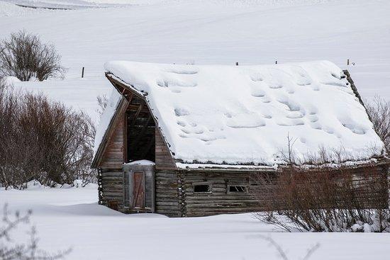 Swan Valley, ID: Old barn seen in Idaho