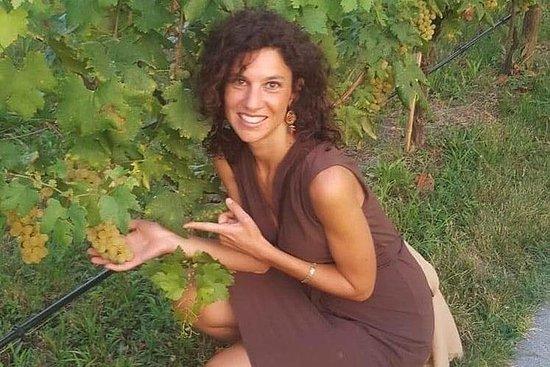 Excursão de dia inteiro a 3 vinícolas...