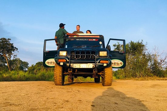 Wild Elephant Jeep Safari ( Half Day)