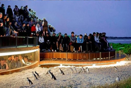Phillip Island Tours (maximaal 11 ...