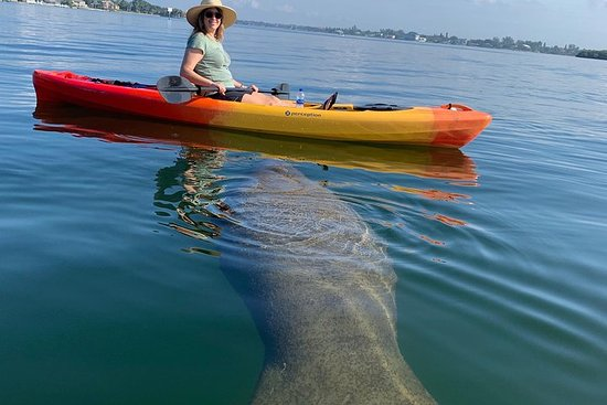 The Best Sarasota Bay & Lido Key...