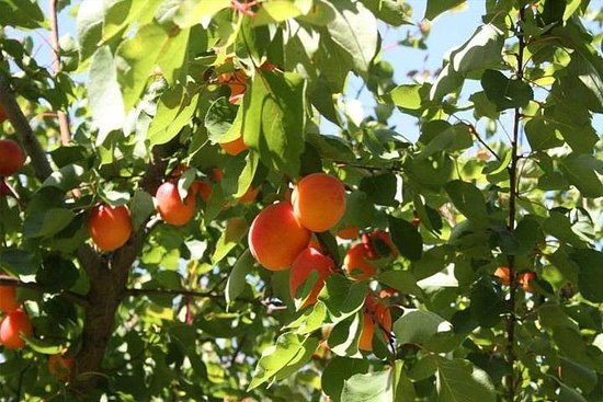 Melbourne Private Fruit Picking Tours ...