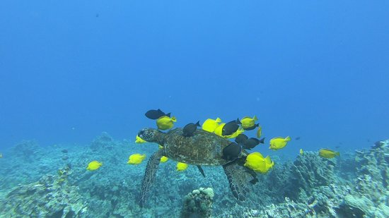 Kayak and snorkel tour: turtle at cleaning station