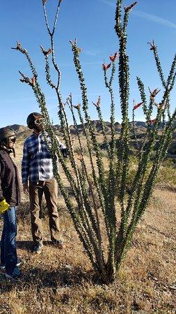 Chiriaco Summit, CA: Randall sharing info about plants!