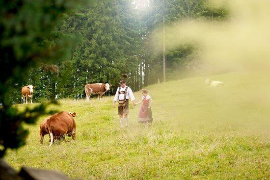 Wackersberg, Германия: Die traumhafte Aussicht in das bayerische Oberland bietet einen Blick auf den Starnbergersee, den Ammersee und das Isartal bis München sowie ein Alpenpanorama vom Karwendel bis zum Wettersteingebirge. Dichter Bergwald und im Sommer grüne Wiesen erlauben es einmal wieder richtig durchzuatmen. (Heilklimatischer Luftkurort)