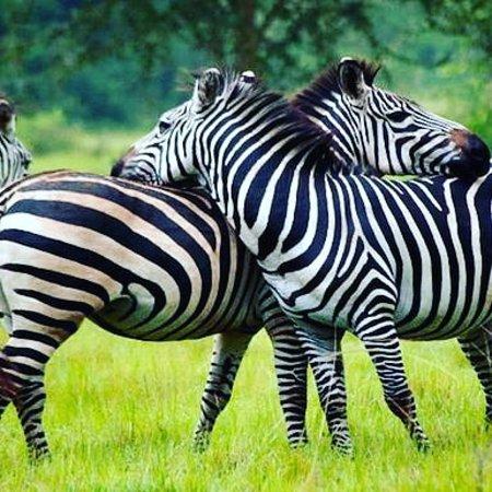 הפארק הלאומי עמק קידפו, אוגנדה: Adventuring kidepo valley park #adventure #wildlife visit the pearl of Africa #uganda 