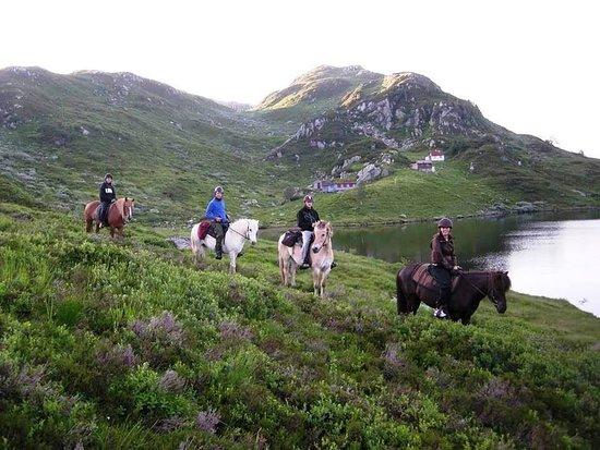 Akra, Norway: Smiedal Aktivitetsferie held til i den vesle bygda Åkra i Kvinnherad. Vi har mange dyr på gården og åtte hestar som vi rir med turistar.