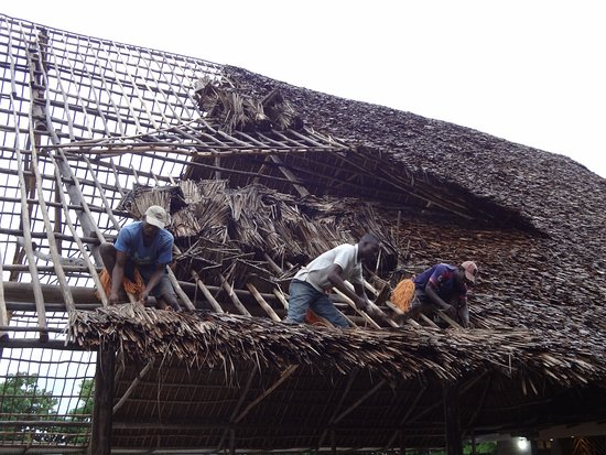 Matema, Танзания: New Dining Pavilion Roof being thatched by hand.