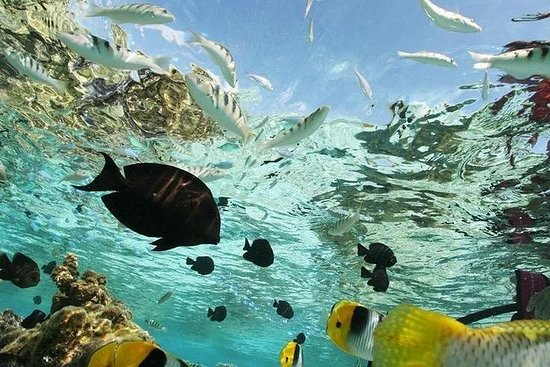 Tudo incluído: Lovina Snorkeling...