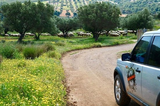 Uncharted Escapes: Athens Private Tour in the Chestnut Forest of...