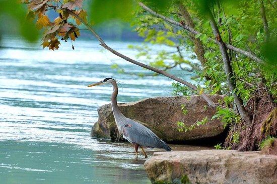 Bird Watching Kayak Tour