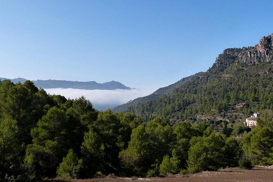 Tarragona, Ruins & Priorat -Reduced group hotel pick-up From Salou...