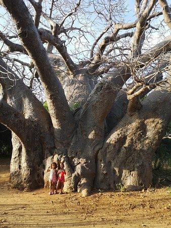 Остров Манда, Кения: Mkoko House
