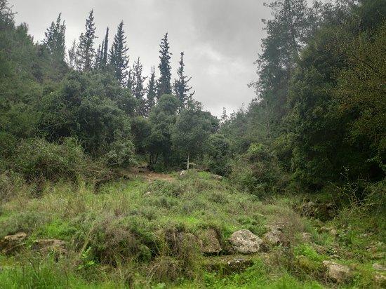 Jerusalem District, Israel: נוף אופייני בפארק, כמובן הכי מומלץ חורף ואביב...
