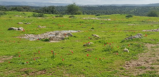 Official Beit Shemesh Map: Adullam Grove Nature Reserve (Beit Shemesh)
