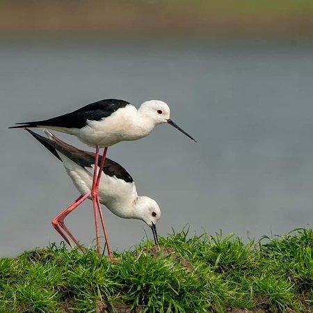 Rajshahi Division, Bangladesh: Birds of Bangladesh